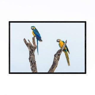 Noir Gallery Macaws Birds Wildlife Brazil Framed Art Print