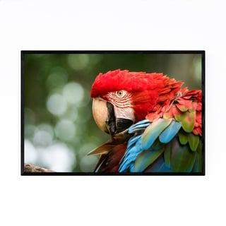 Noir Gallery Macaw Bird Wildlife Animal Framed Art Print