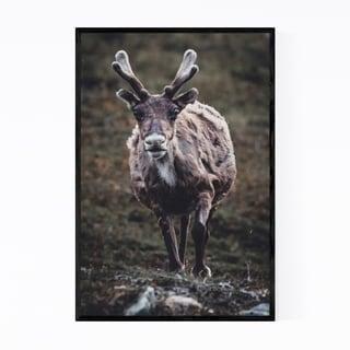 Noir Gallery Raindeer Animal Wildlife Norway Framed Art Print