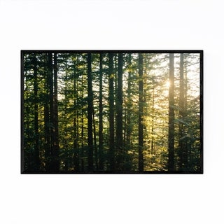 Noir Gallery Oregon Pine Trees Forest Nature Framed Art Print