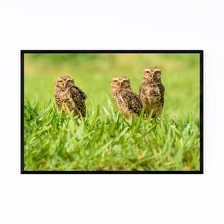 Noir Gallery Owl Bird Animal Wildlife Brazil Framed Art Print
