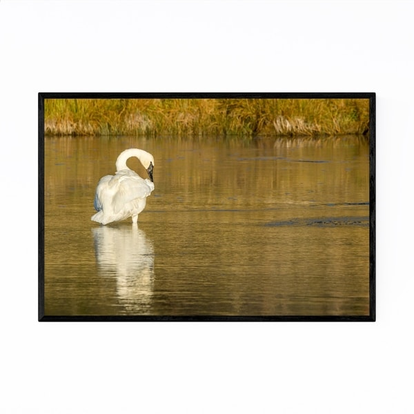 Noir Gallery Yellowstone National Park Swan Framed Art Print