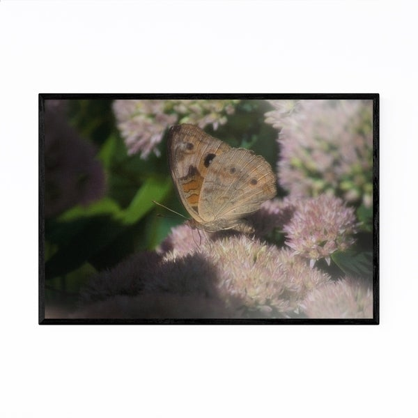Noir Gallery Buckeye Butterfly Animal Nature Framed Art Print