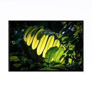 Noir Gallery Bolivian Rainforest Landscape Framed Art Print