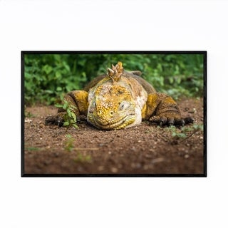 Noir Gallery Iguana Animal Wildlife Ecuador Framed Art Print