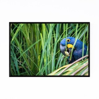 Noir Gallery Hyacinth Macaw Bird Brazil Framed Art Print