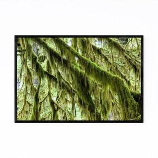 Noir Gallery Rainforest Gustavus Alaska Framed Art Print