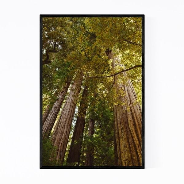 Noir Gallery Redwood Forest California Trees Framed Art Print