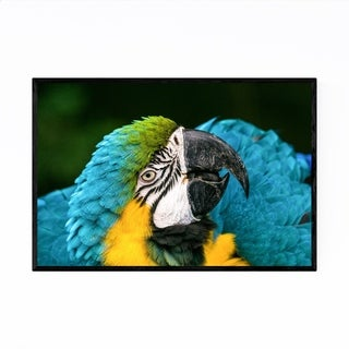 Noir Gallery Macaw Bird Wildlife Bolivia Framed Art Print