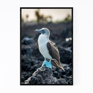 Noir Gallery Blue Footed Boobies Bird Animal Framed Art Print