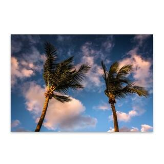 Noir Gallery Jon Bilous 'Naples Palms' Naples, Florida Beach Palm Trees Aluminum Metal Wall Art Print