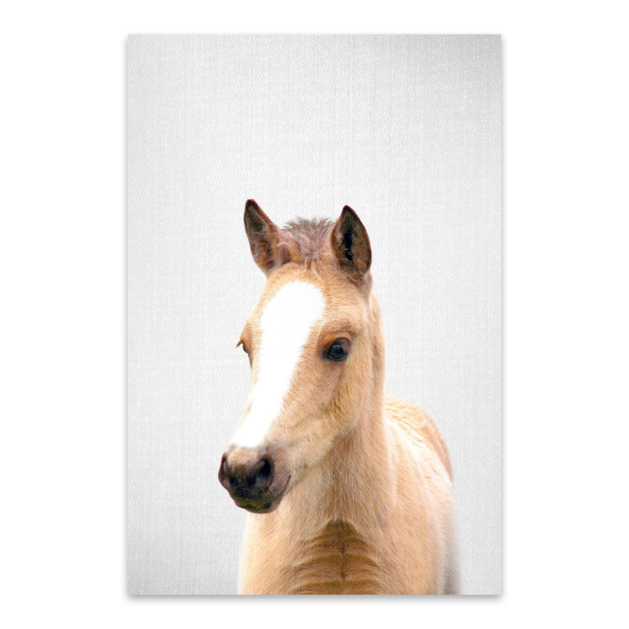 Shop Gal Design Baby Horse Noir Gallery Cute Peekaboo Animal Metal Wall Art Print Overstock 27560299