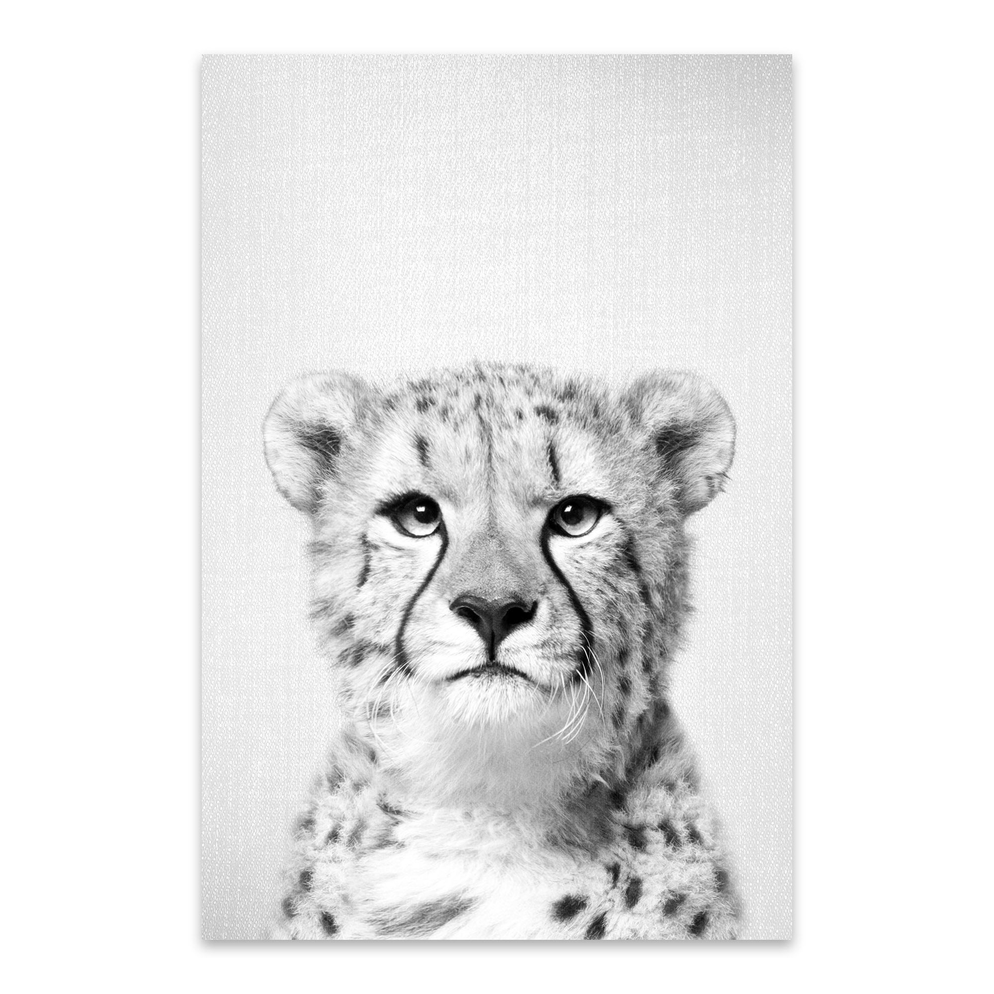 shop noir gallery gal design cheetah black and white african cheetah peekaboo animal metal wall art print overstock 27560615 noir gallery gal design cheetah black and white african cheetah peekaboo animal metal wall art print