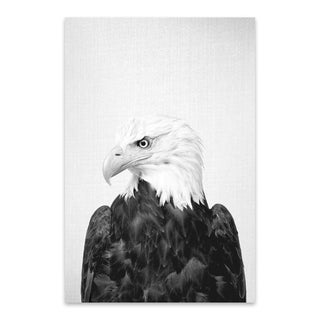 Noir Gallery Gal Design 'Eagle Black and White' American Bald Eagle Patriot Bird Metal Wall Art Print