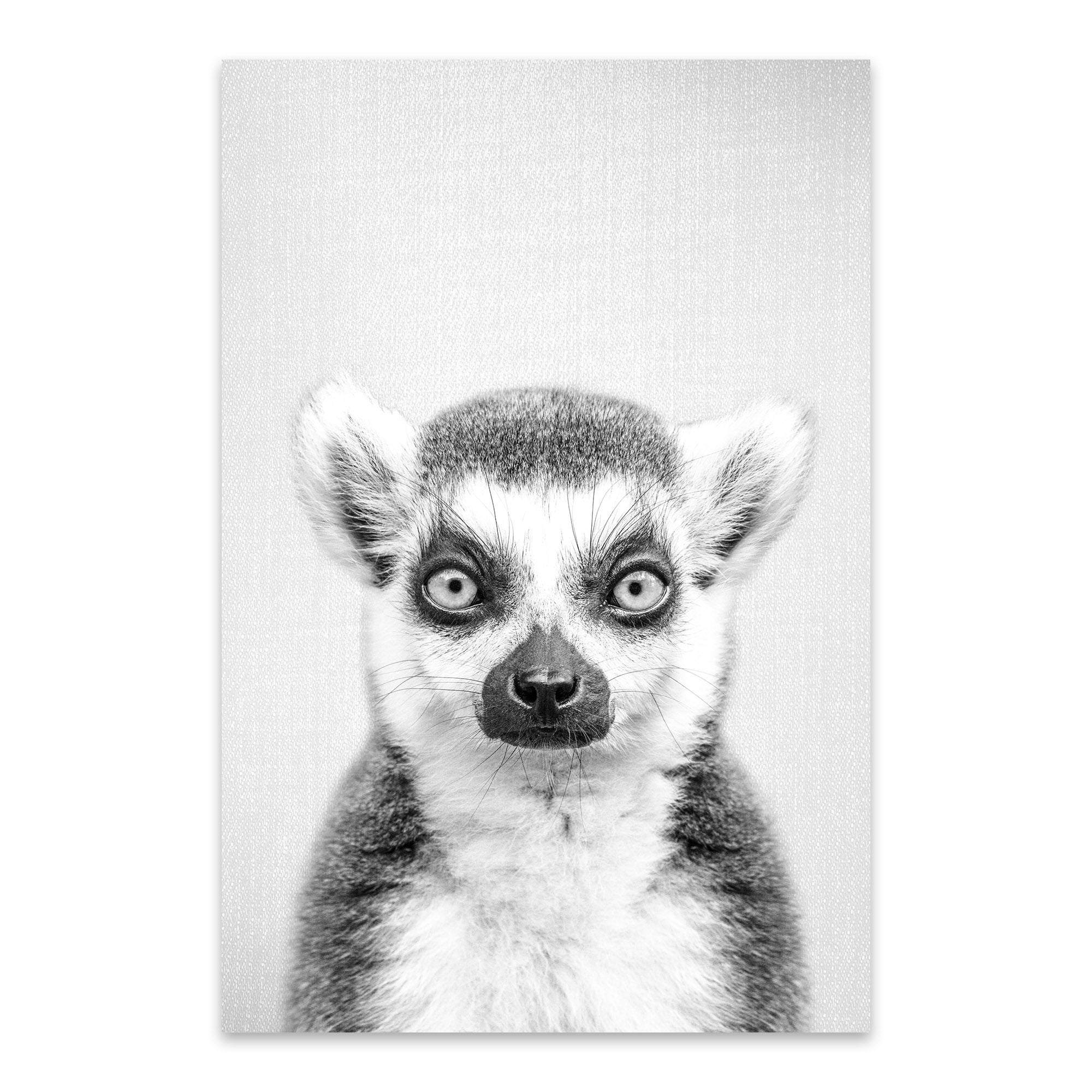 Noir Gallery Lemur Black And White Nursery Animal Metal Wall Art Print
