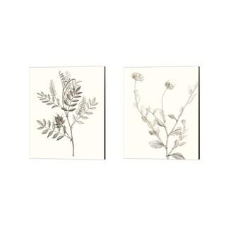 Vision Studio 'Neutral Botanical Study A' Canvas Art (Set of 2)