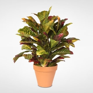 Multi Colored Real Touch Croton Plant in Clay Pot