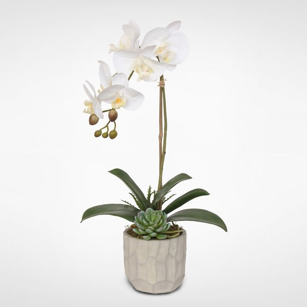 Real Touch White Phalaenopsis Orchid in a Stone Carved Pot