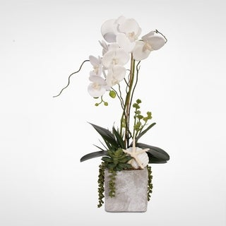 Real Touch White Orchid w/Seashell & Succulents in a Stone Wash Pot