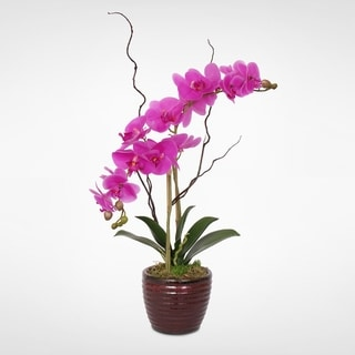 Real Touch Purple Phalaenopsis Orchid in a Red Ceramic Pot