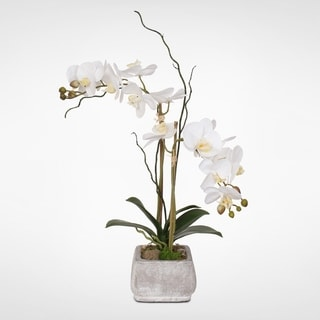 Real Touch Cream White Phalaenopsis Orchids in a Stone Wash Pot