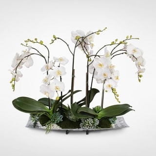 Real Touch White Orchids with Succulents in an Aluminum Tray