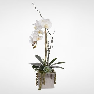 Real Touch White Orchid with Succulents in a Silver Ceramic Pot