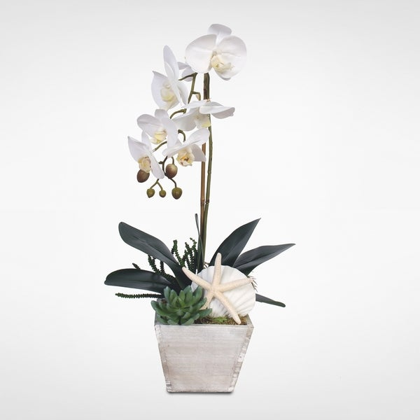 Real Touch White Orchid w/Seashells & Succulents in a Wood Pot