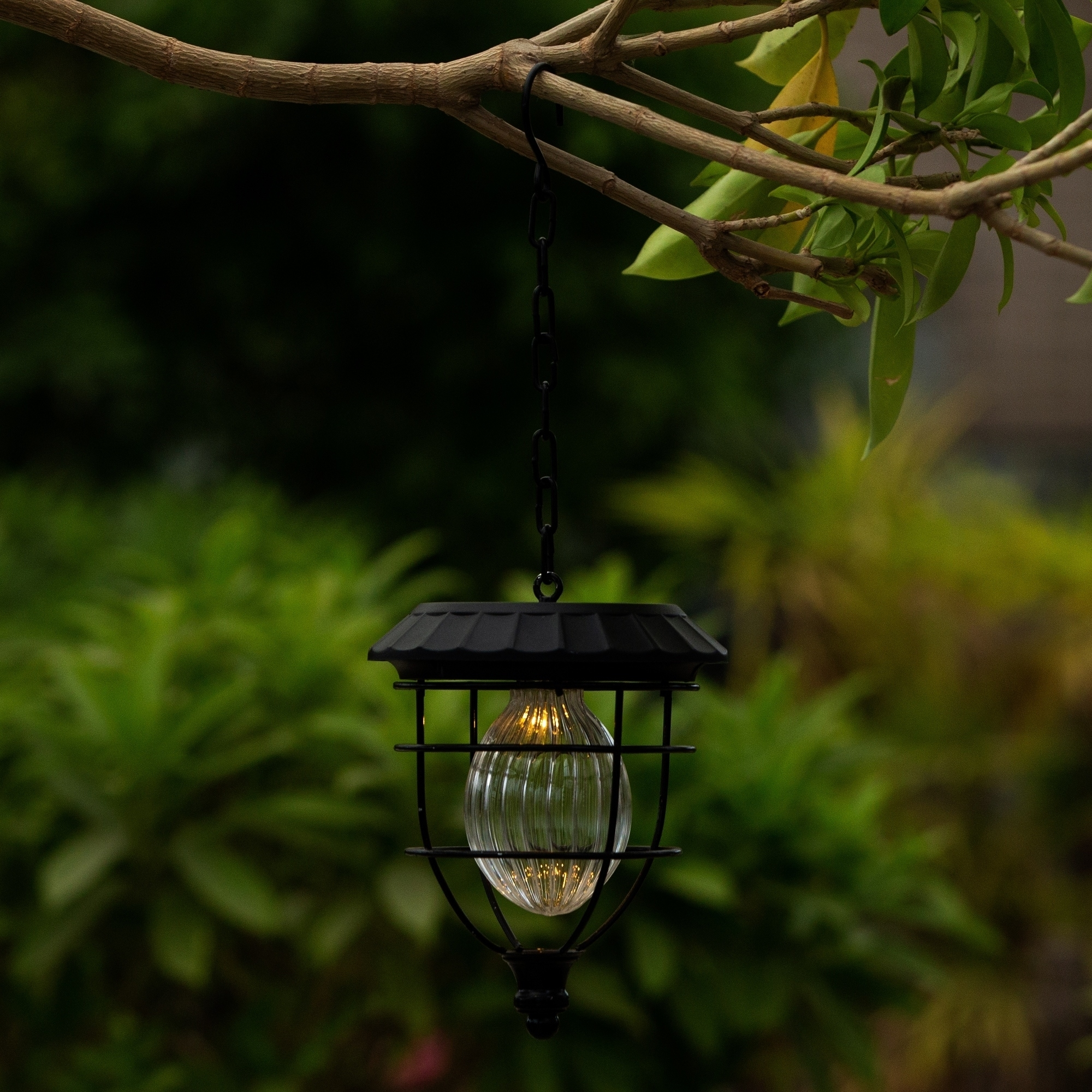 Havenside Home Grayton 5.9-inch Solar Hanging Accent Globe Light in Iron Lantern