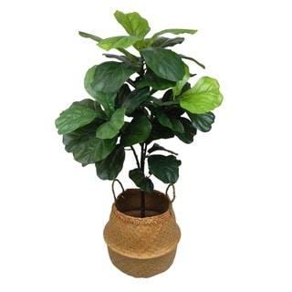 Fiddle leaf tree in seagrass basket