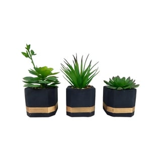 Set of 3 succulents in modern painted cement pots