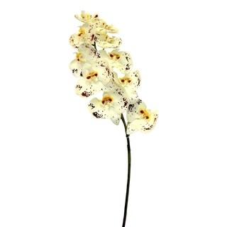 "36"" Phalaenopsis orchid stem"