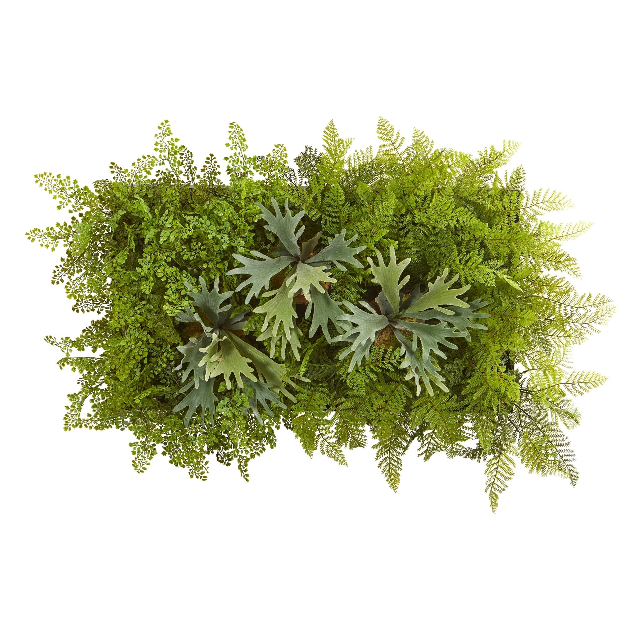 38 x 23 Staghorn and Fern Artificial Living Wall