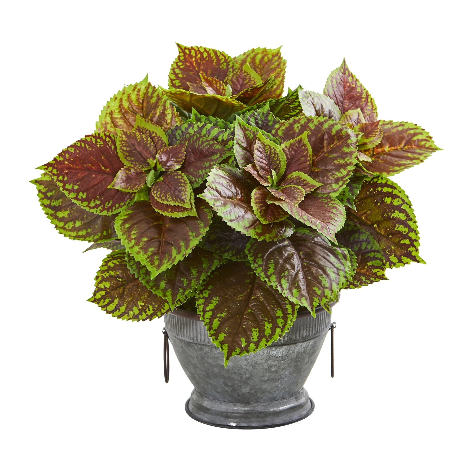 Coleus Artificial Plant in Decorative Bowl (Real Touch)