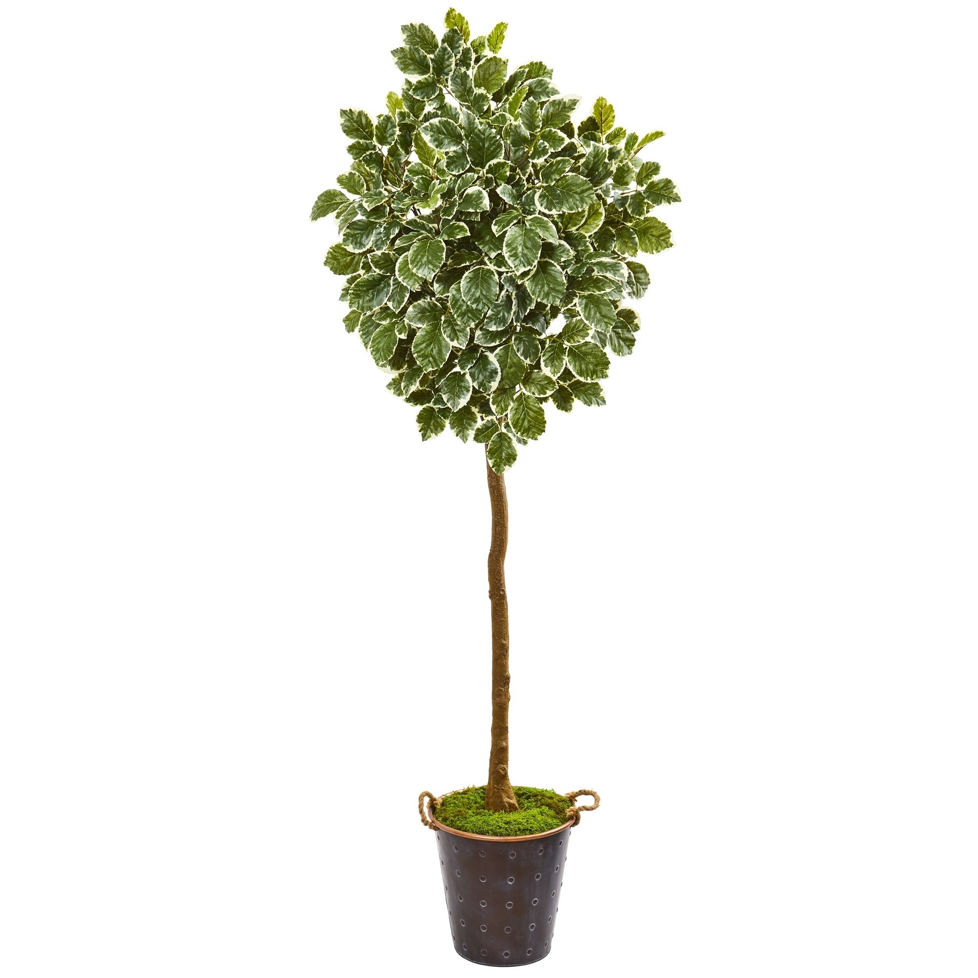 77 Variegated Aralia Artificial Tree in Metal Planter