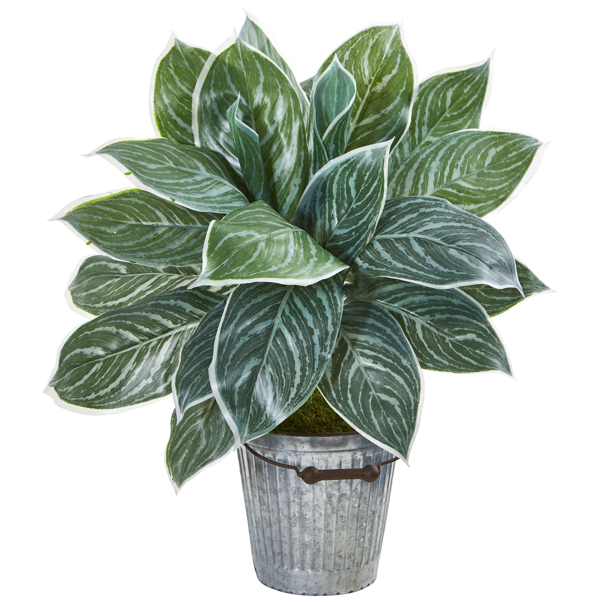 24 Silver Aglonema Artificial Plant in Decorative Bucket (Real Touch)
