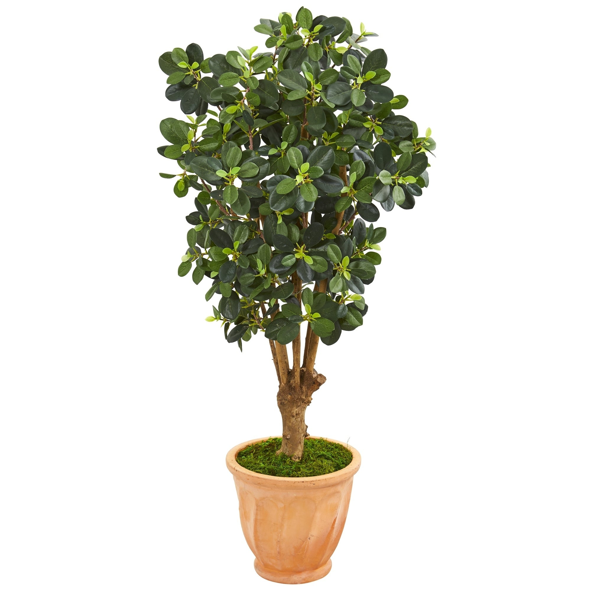 46 Panda Ficus Artificial Tree in Terra-Cotta Planter