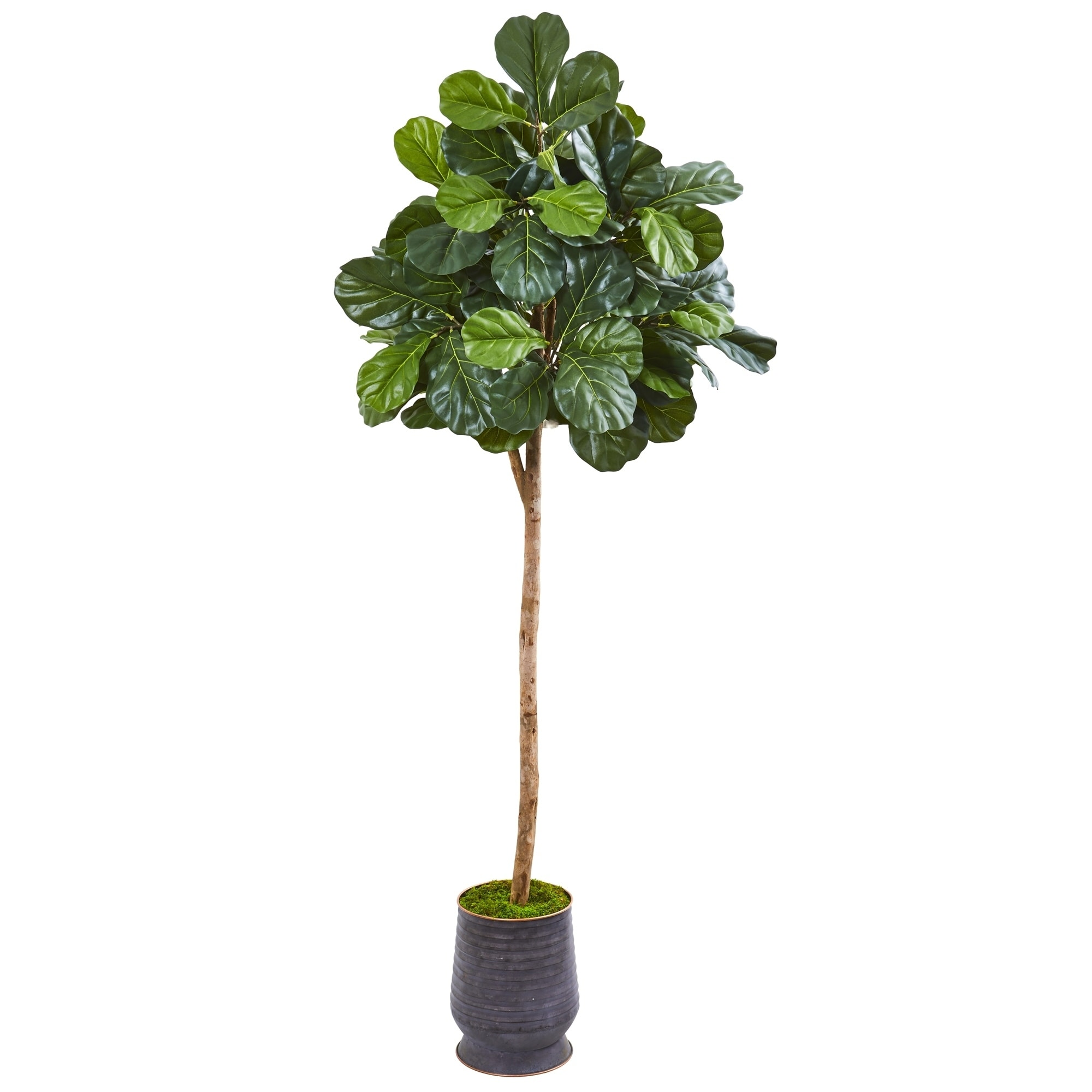 Fiddle Leaf Fig 80-inch Artificial Tree in Ribbed Metal Planter