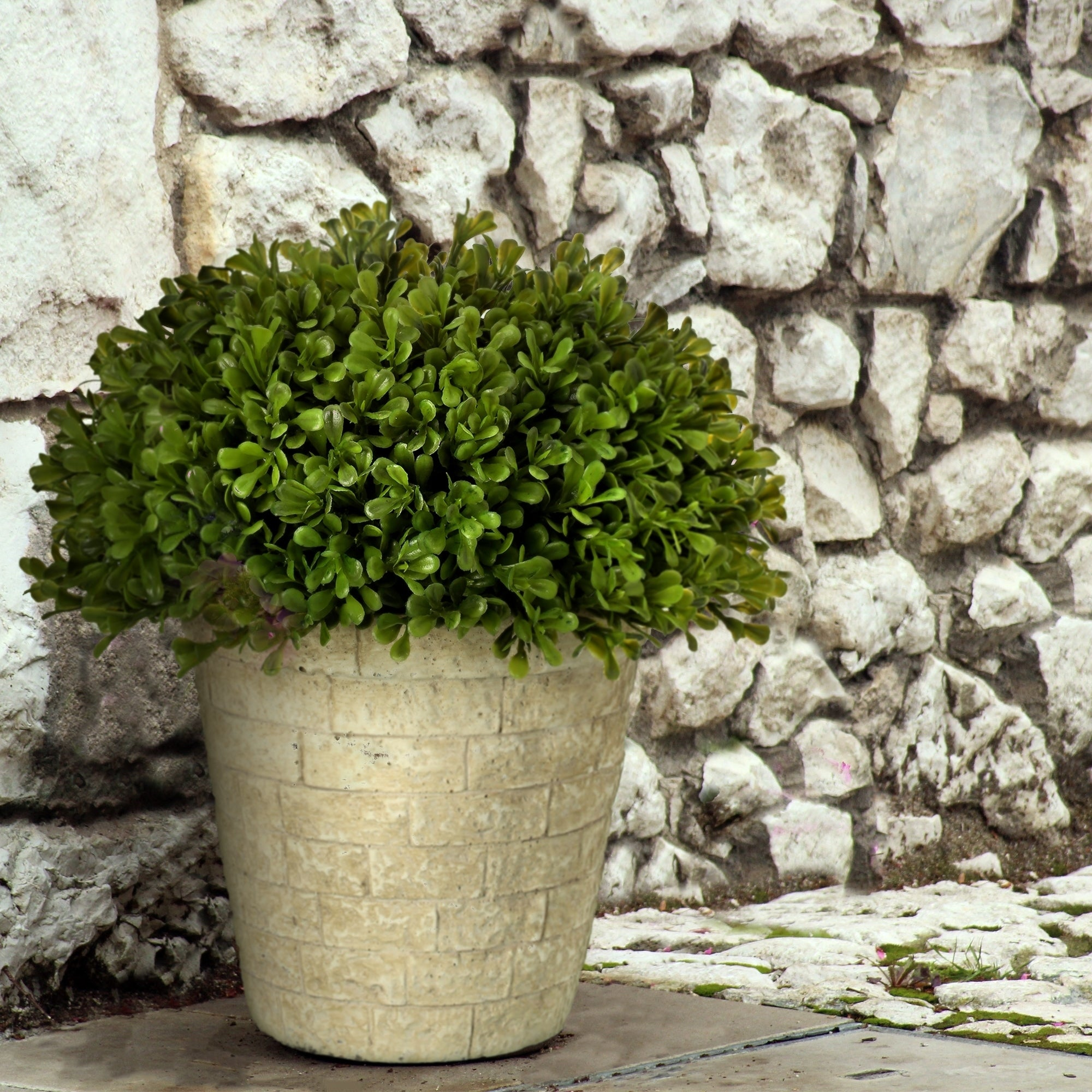 Spring Boxwood Dome Topiary Potted 11 - Plastic and Cement