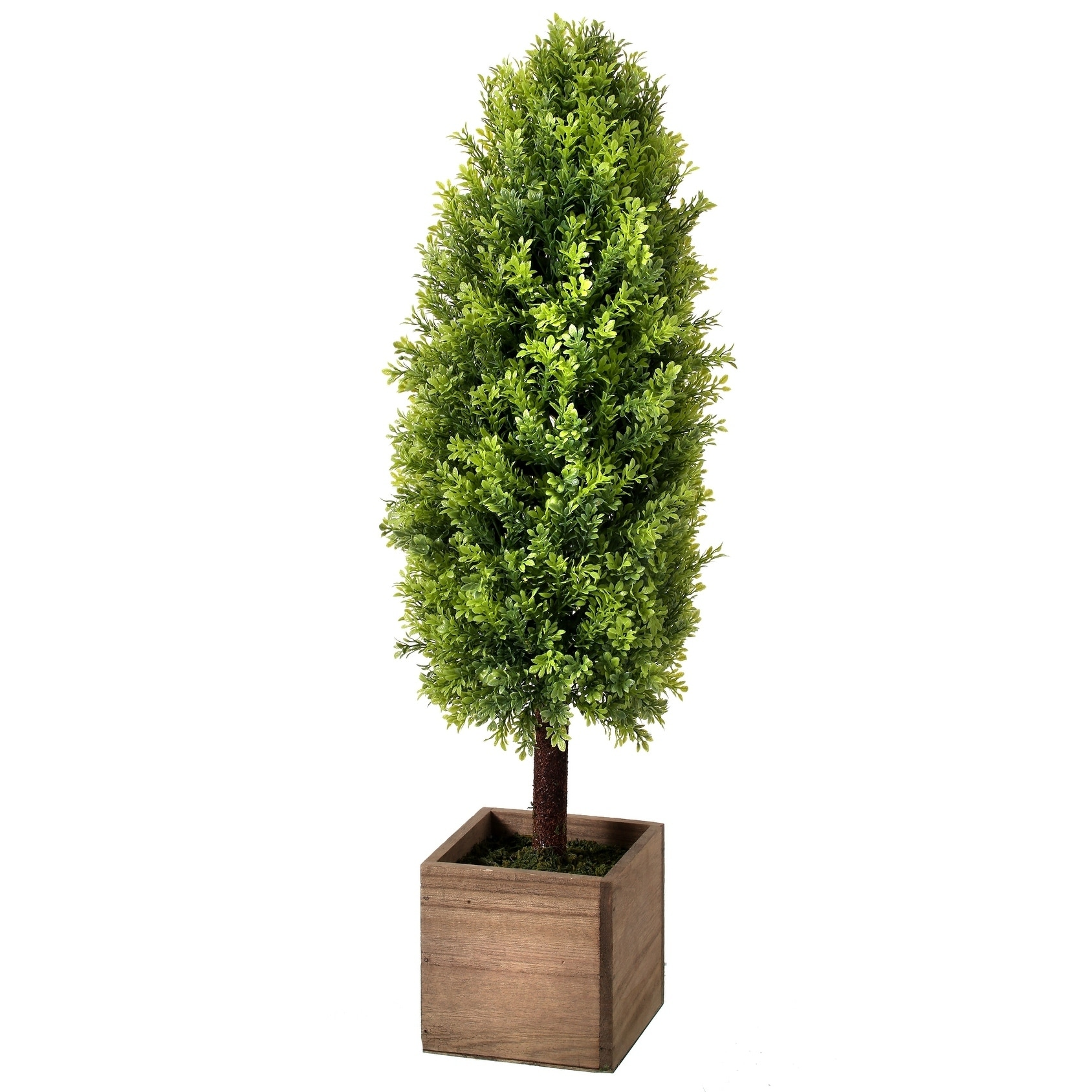 Baby Boxwood Tapered Topiary in Wood Box 25 - Plastic