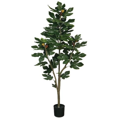 "50""h Potted Fig Tree - Green - 20""L x 20""W x 4' 2""H"