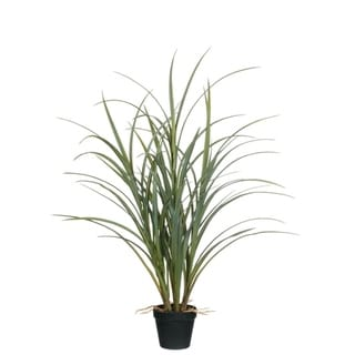 Potted Grass with Roots