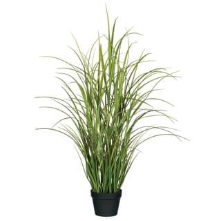 Potted Reed Grass