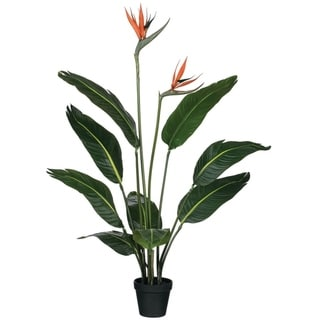 "Potted Bird Of Paradise with Blooms Tree - Green - 18""L x 18""W x 39""H"
