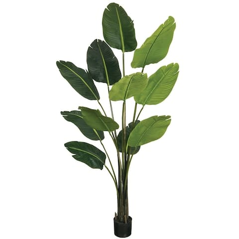 "75""h Bird Of Paradise Potted Foliage - Green - 5'L x 3' 4""W x 6' 3""H"