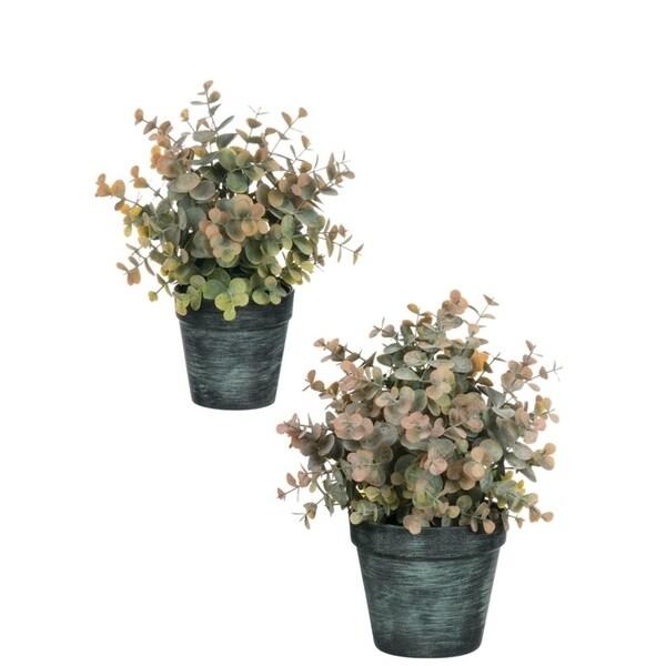 """Potted Eucalyptus Arrangements - Set of 2 - Brown - 8""""L x 8""""W x 12""""H, 7""""L x 7""""W x 10""""H"""