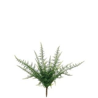 Feather Fern Bush