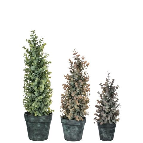 """Potted Eucalyptus Topiaries - Set of 3 - Brown - 5, 5, 4""""L x 5, 5, 4""""W x 20.5, 17, 13""""H"""