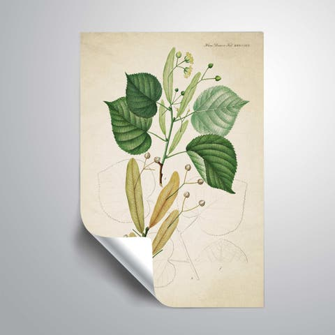 ArtWall Flower drawing 9 Removable Wall Art Mural