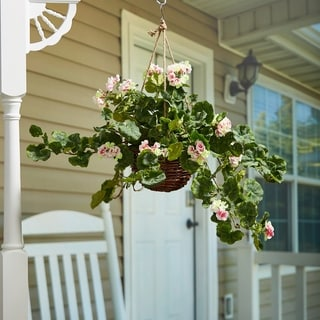 Pure Garden Artificial Pink Geraniums Hanging Basket